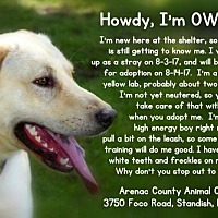 Adopt A Pet :: OWEN - Standish, MI