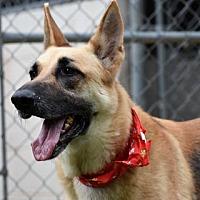 Adopt A Pet :: Jack - Montgomery, AL
