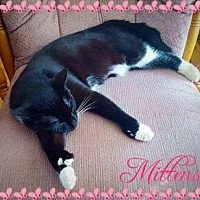 Adopt A Pet :: Mittens (Guest) - Owings Mills, MD