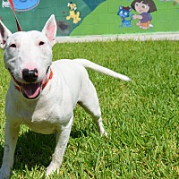 Adopt A Pet :: Terry - Laredo, TX