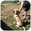 Photo 2 - Golden Retriever/Hound (Unknown Type) Mix Dog for adoption in Wallaceburg, Ontario - Wyatt