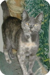 Calico Cat for adoption in Bear, Delaware - Cashmere