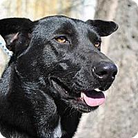 Adopt A Pet :: Josie - Tunica, MS