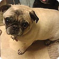 Adopt A Pet :: Chloe - Eagle, ID