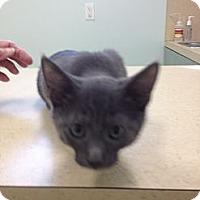 Adopt A Pet :: Marissa - Ft. Lauderdale, FL