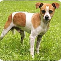 Adopt A Pet :: Spunky - Chicago, IL