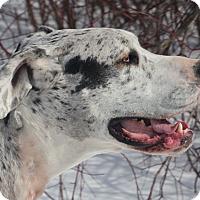 Adopt A Pet :: Gwen - Woodstock, IL