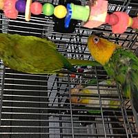 Adopt A Pet :: Rainier & Sequoia - Punta Gorda, FL