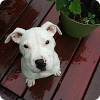 Adopt A Pet :: Billabong - Southampton, PA