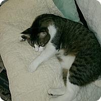 Adopt A Pet :: Sagan - Naples, FL