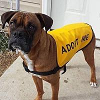 Adopt A Pet :: Kane - Troy, MI