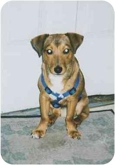 Miniature Pinscher Mix Dog for adoption in Owatonna, Minnesota - Duke