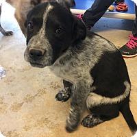 Adopt A Pet :: Livingston - McIntosh, NM