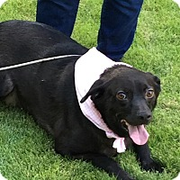 Adopt A Pet :: Jasmine - Lebanon, ME