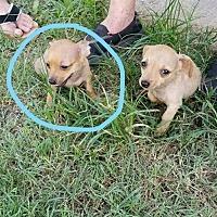 Adopt A Pet :: Zane - Madison, WI