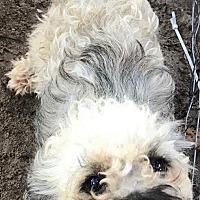 Adopt A Pet :: Randall - East Hartford, CT