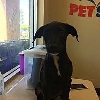 Adopt A Pet :: Negrita - LAKEWOOD, CA