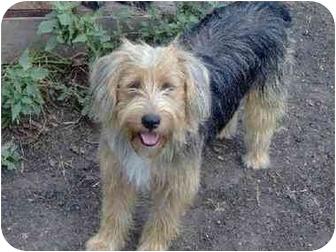 Bearded Collie Mix Dog for adoption in Wharton, Texas - Tasha