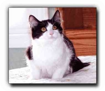 Domestic Mediumhair Cat for adoption in Howell, Michigan - Larry