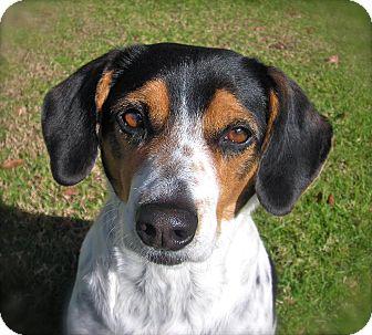 Beagle Mix Dog for adoption in El Cajon, California - Maebe