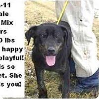 Adopt A Pet :: # 072-11 @ Animal Shelter - Zanesville, OH