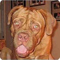 Adopt A Pet :: Brinks - League City, TX