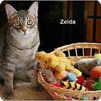Adopt A Pet :: Zelda - Portland, OR