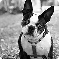 Adopt A Pet :: Carlos - Greensboro, NC