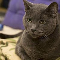 Adopt A Pet :: Binxi - Lombard, IL