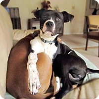 Adopt A Pet :: Quincy - Chattanooga, TN
