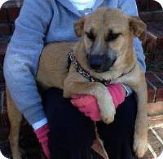 Shepherd (Unknown Type) Mix Dog for adoption in Irmo, South Carolina - Maggie