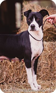 Hound (Unknown Type) Mix Dog for adoption in Southern Pines, North Carolina - Panda