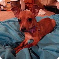 Adopt A Pet :: Tink - West Deptford, NJ