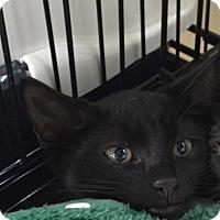 Adopt A Pet :: Hadley - Speonk, NY