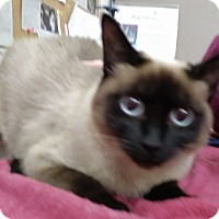 Adopt A Pet :: Bellaluna - Trevose, PA