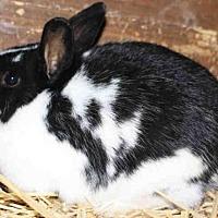 Adopt A Pet :: *HAZEL* - Salt Lake City, UT
