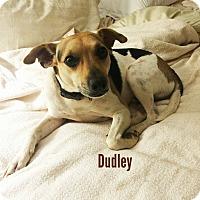 Adopt A Pet :: Dudley - Hopkinton, MA