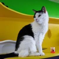 Adopt A Pet :: Razz - Northbrook, IL