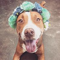 Adopt A Pet :: Helga - Phoenix, AZ