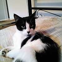 Adopt A Pet :: Fin - Vancouver, BC