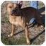 Photo 2 - Pit Bull Terrier Mix Dog for adoption in Marion, Arkansas - Daniel