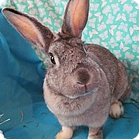 Adopt A Pet :: Carolina - Huntsville, AL