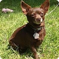 Adopt A Pet :: Sadie2 - Kingwood, TX