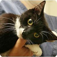 Adopt A Pet :: Liza - Secaucus, NJ