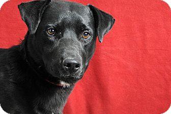 Beagle Mix Dog for adoption in Savannah, Georgia - Lil Richard