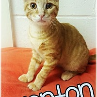 Adopt A Pet :: Wonton 2016210 - Huntington, NY