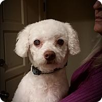 Adopt A Pet :: Chelsea - Santa Ana, CA