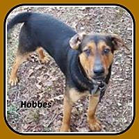 Adopt A Pet :: HOBBES - Malvern, AR