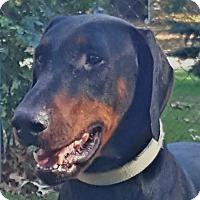 Adopt A Pet :: Lance - Arlington, VA
