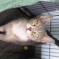 Adopt A Pet :: Abby - Woodside, NY